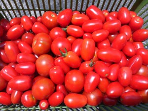 プチトマト大量