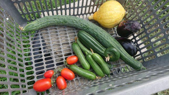 コリンキー、きゅうり、水ナス、プチトマト