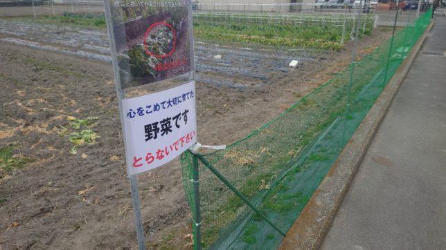 心をこめて大切に育てた野菜ですとらないで下さい